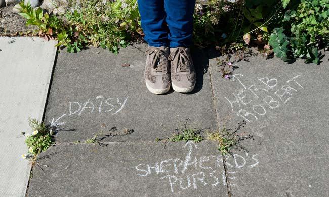 افزایش گچنویسی نام گیاهان در پیادهروها