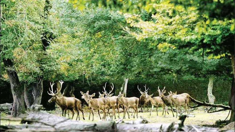 بخشی از سند پارک ملی گلستان باطل شد