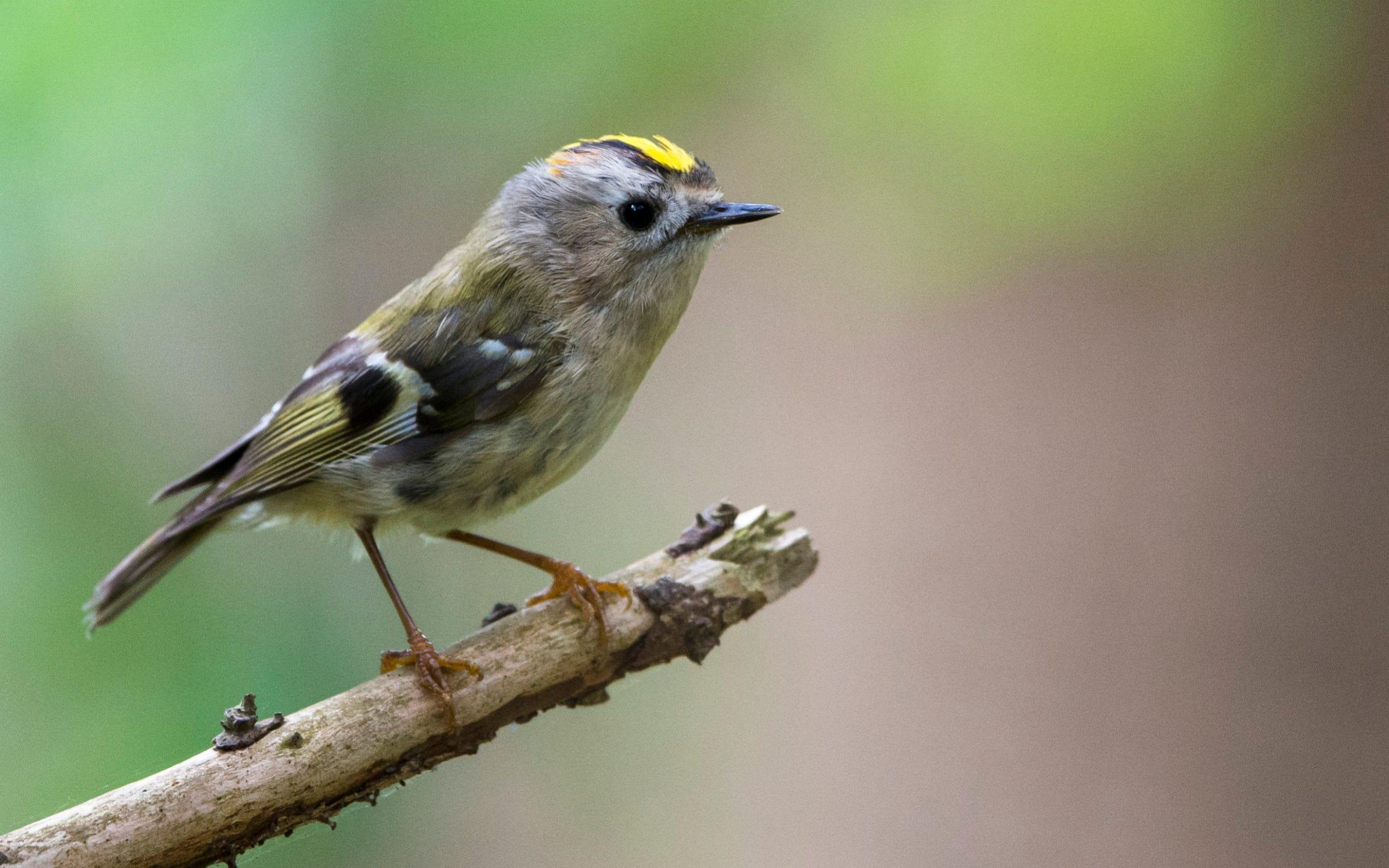 هوای پاکتر زندگی میلیونها پرنده را نجات میدهد