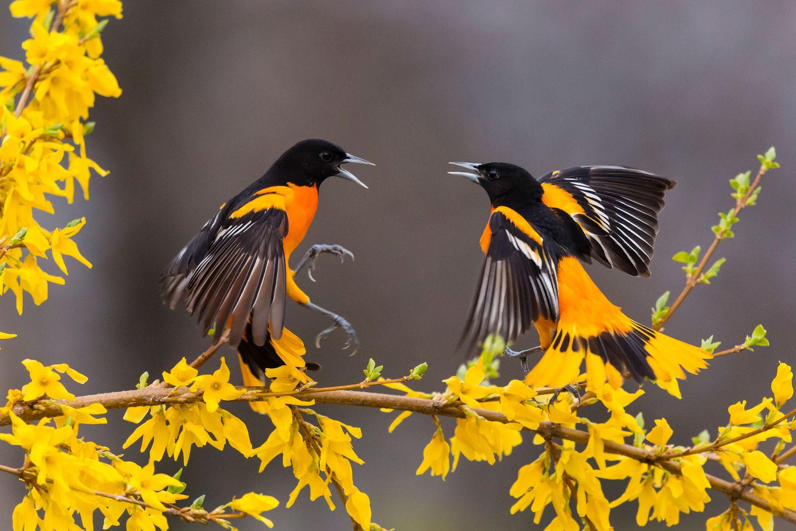 آلودگی نوری و صوتی میتواند تاثیرات عمیقی بر تولیدمثل پرندگان داشته باشد