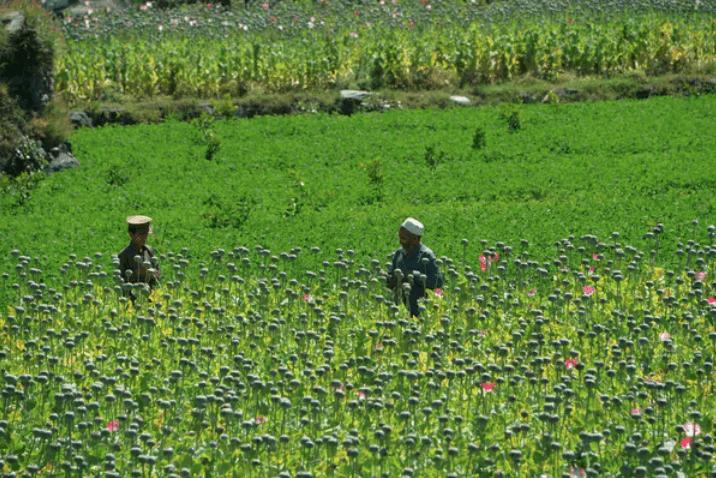 تجارت مواد مخدر و اخاذی؛ اصلیترین منابع درآمد «جنبش اصیل طالبان»