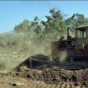 جادهای به مقصد نابودی جنگلهای بلوط ۵۰۰ ساله