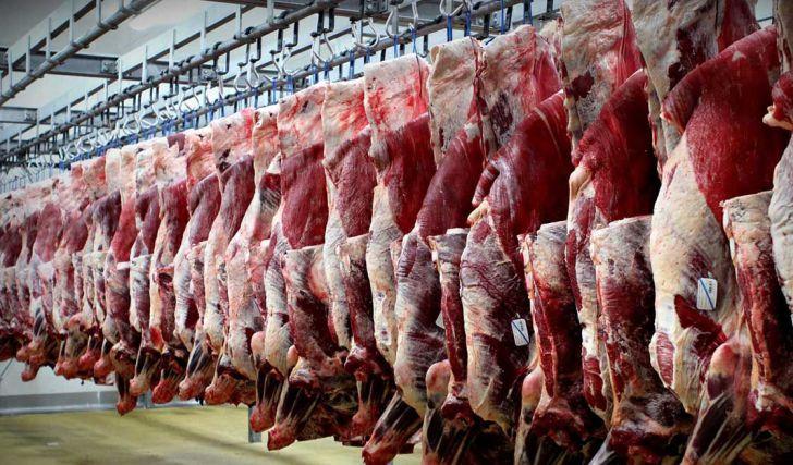 دامهای مولد را کشتار میکنیم تا شاهد گرسنگی آنها نباشیم