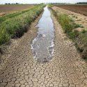 صد درصد مساحت کشور تحت تاثیرخشکسالی است