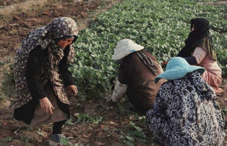 سرِزمین: گزارشی از وضعیت زنان کشاورز افغانستانی در حاشیهی تهران