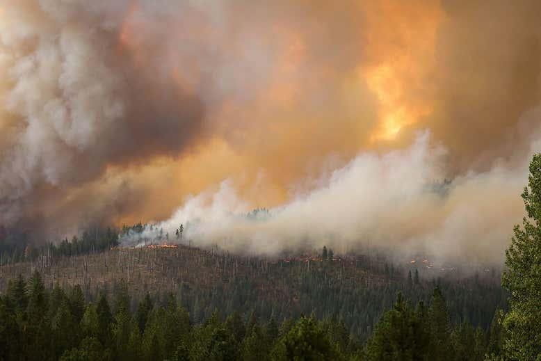 ارتباط میان حریق جنگلها و ابتلا به کرونای شدید