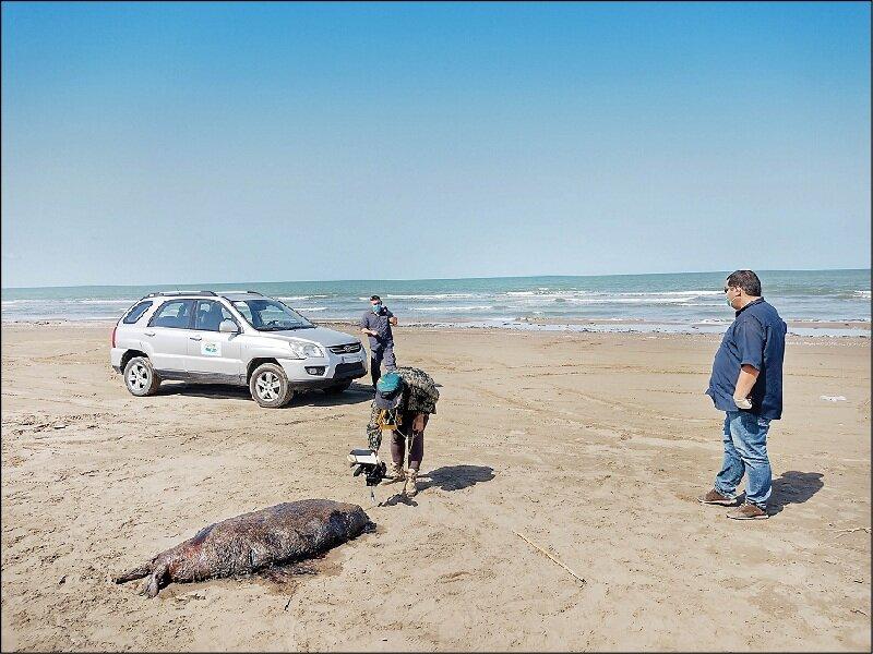 مرگ بیصدای فوکها در سواحل دریای خزر